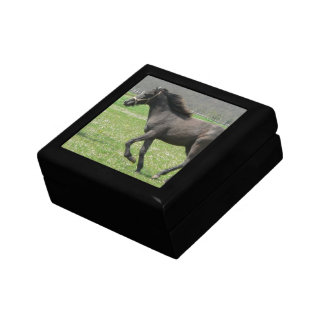 Galloping Colt  Gift Box
