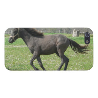Galloping Colt iPhone 5 Cover