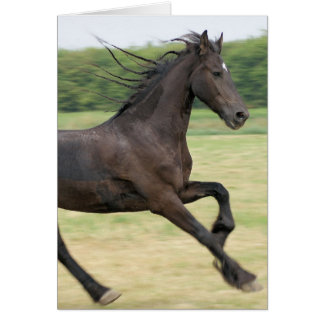 Galloping Friesian Greeting Cards