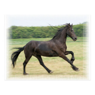 Galloping Friesian Post Cards
