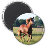 Galloping Horse 6 Cm Round Magnet