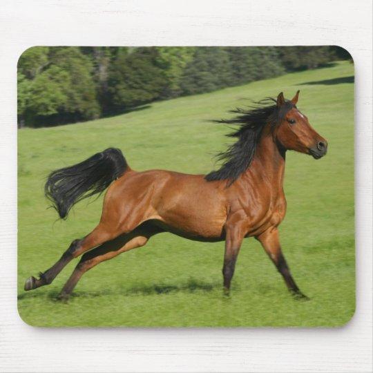 Galloping Horse Mousepad