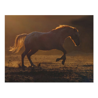 Galloping Horse Postcard With Back Lighting