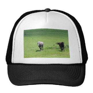 Galloping Horses Cap