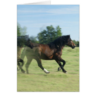 Galloping Mustangs Greeting Card