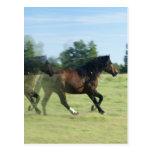 Galloping Mustangs Postcard