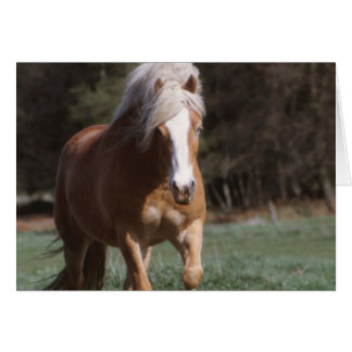 Galloping Palomino  Greeting Card