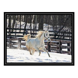 Galloping White Horse Postcard