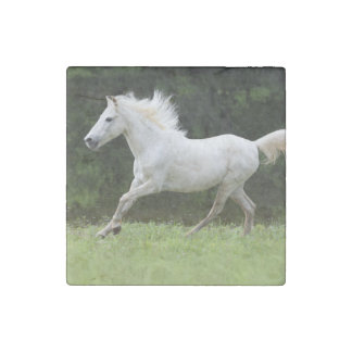 Galloping White Horse Stone Magnet