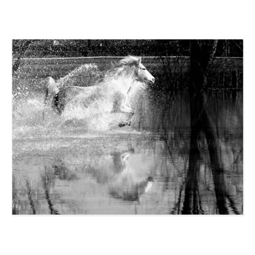 Galloping White Water Horse Post Cards