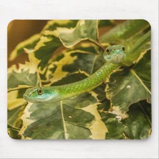 Gambia Snake Mouse Pad
