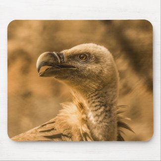 Gambia Vulture Mouse Pad