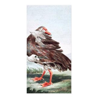 Gambian Goose Vintage Art Custom Photo Card