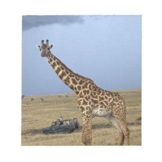 Game drive safari watching Masai Giraffe Notepad