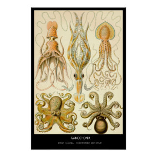 Gamochonia – Plate 54 - Kunstformen der Natur Posters