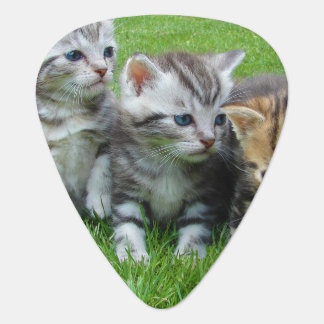 Gang of Adorable Kittens Guitar Pick