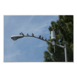 Gang Of Eight Pigeons Sitting On The Lamp Post Nea Posters