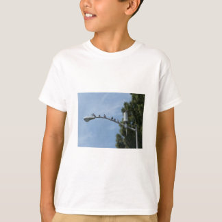 Gang Of Eight Pigeons Sitting On The Lamp Post Nea Tee Shirt