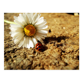 Gänseblümchen and ladybird postcard