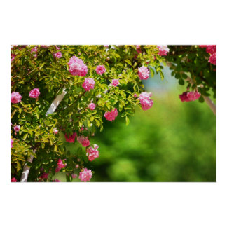 Garden Arch with Roses Poster