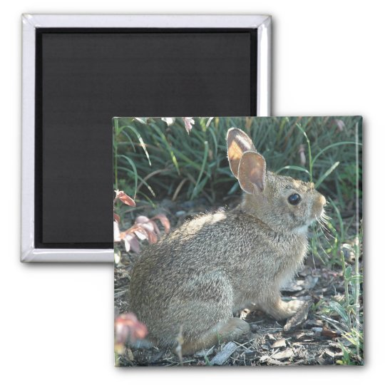 Garden Bunny Magnet