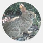 Garden Bunny Round Stickers