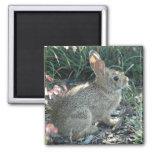 Garden Bunny Square Magnet