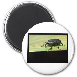 Garden critters - Beetle 001 Refrigerator Magnets
