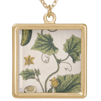 Garden Cucumber, plate 4 from 'A Curious Herbal', Gold Plated Necklace