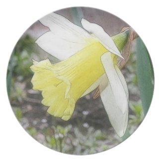 Garden Daffodil In Early Spring Plates