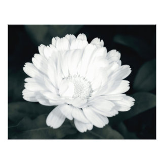 Garden flower 21.5 cm x 28 cm flyer