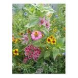 Garden flowers as daisy, zinnia, poppy, cornflower