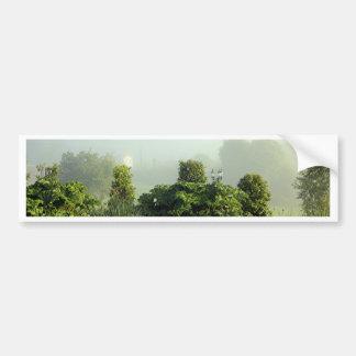 Garden in mist, Arzua, Spain Bumper Sticker