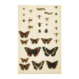 Garden Insects by Vision Studio Canvas Print