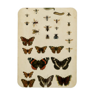 Garden Insects by Vision Studio Flexible Magnet