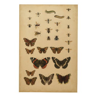 Garden Insects by Vision Studio Wood Canvas