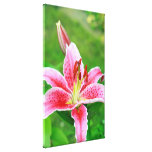 Garden lily close up stretched canvas prints