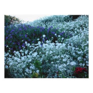 garden new zealand photo print