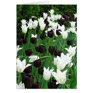 GARDEN OF BLACK AND WHITE TULIPS NOTE CARD