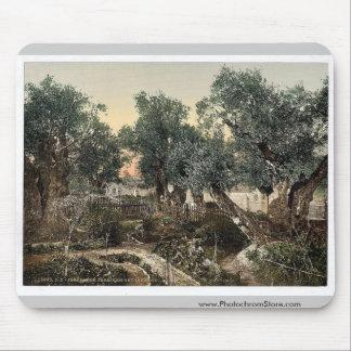 Garden of Gethsemane, Jerusalem, Holy Land classic Mouse Pad