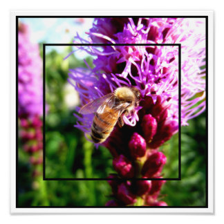 """Garden of Life"" Liatris Bloom Bee Rocky Mountains Photo Print"