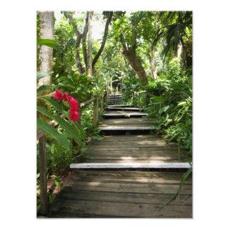 Garden of the sleeping giant, Fiji 2 Photo Print