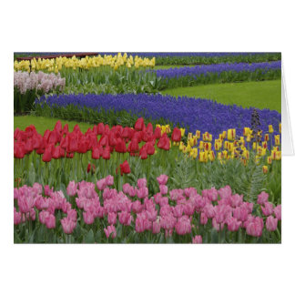 Garden of tulips, Grape Hyacinth and Card