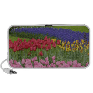 Garden of tulips Grape Hyacinth and Speaker System