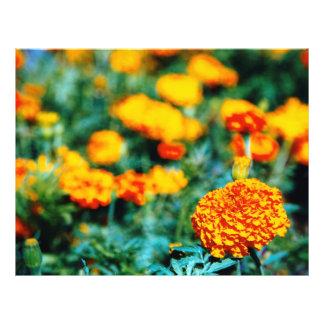 Garden of zinnias 21.5 cm x 28 cm flyer