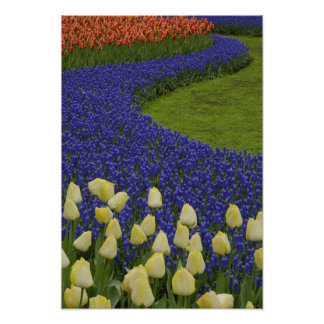 Garden pattern of Grape Hyacinth flowers and 2 Poster