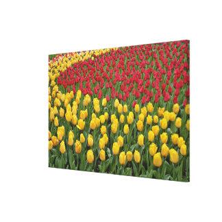 Garden pattern of tulips, Keukenhof Gardens, 2 Canvas Print