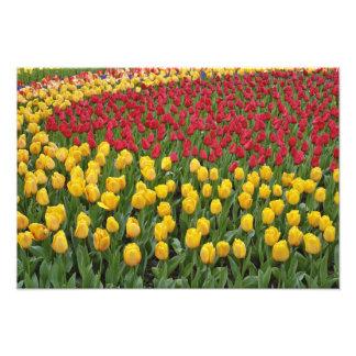 Garden pattern of tulips, Keukenhof Gardens, 2 Photo Print