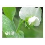 Garden Pea Blossom custom template postcard