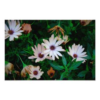 Garden Photo Print